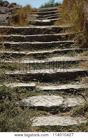 Stone Steps Overgrown With Grass