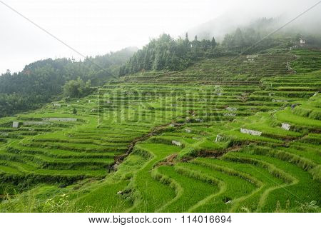 Rice Terraces of Yunhe