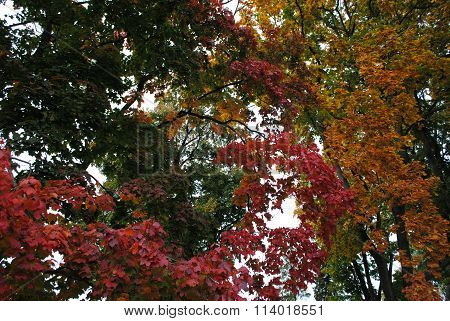 miscellaneous colors of leaves on trees in autumn