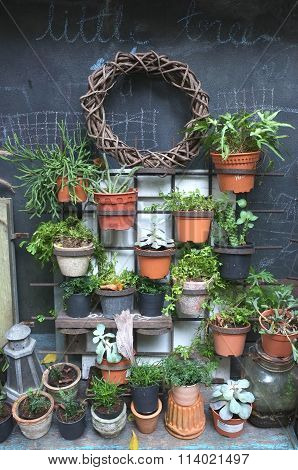 Garden decoration of many plants in pot