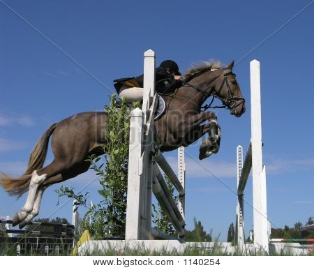 Side View Of A Horse Jumping