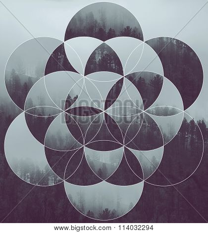 Collage With The Forest And Flower Of Life