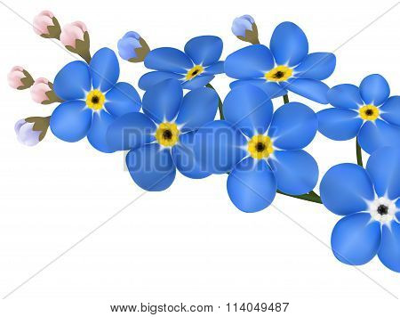 Branch Of Blue Forget-me-not Flowers Isolated - Illustration