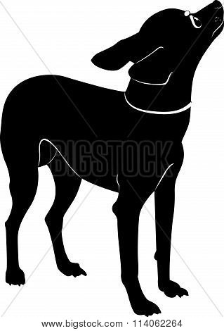 dog breed toy terrier