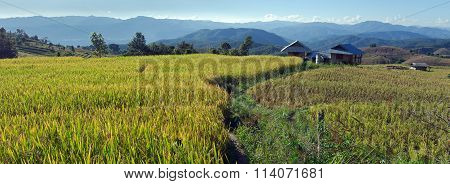 Panoramic View Of Rice Farm And Cloudy Sky By Local People In Mountain, Northern Part Of Thailand
