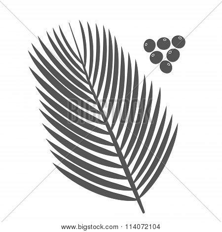 Acai palm leaves and acai berries