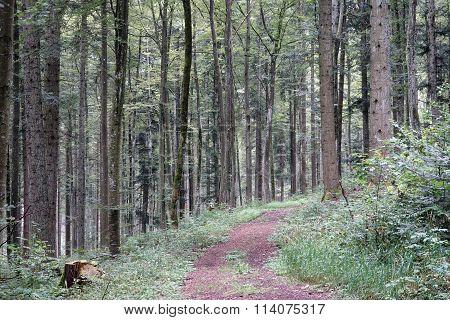 Schwaben Forest