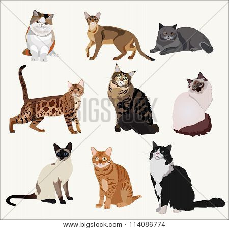 Vector Breed cats in different poses. Cartoon highly detailed pets.