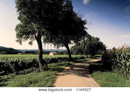 Vineyards Maize Lot Valley France