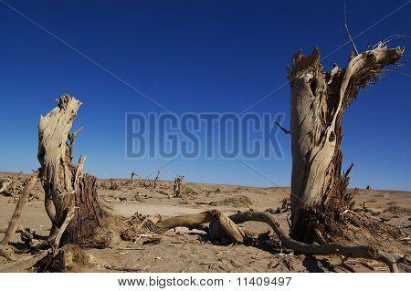Abgestorbene Bäume