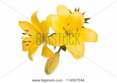 two huge yellow lilies and button