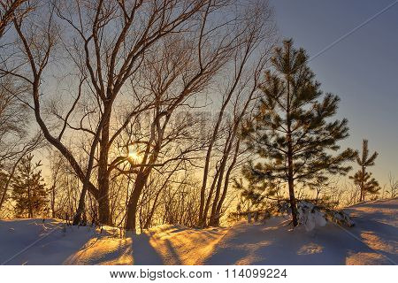 Winter Landscape With Evening Sunset