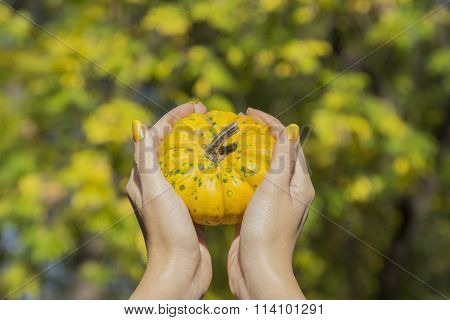 Female hands holding yellow gourd in the park