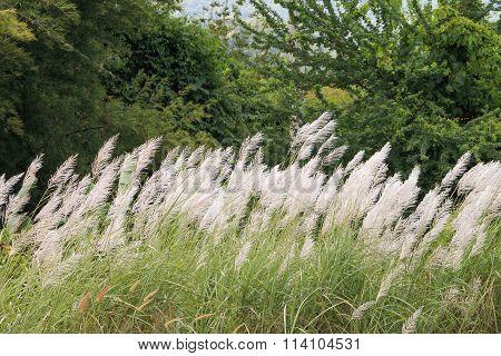 White Field In The Wind