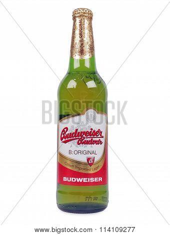 Budweiser Lager Beer