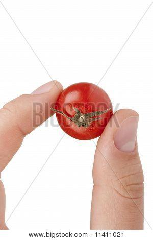 Small Red Tomato