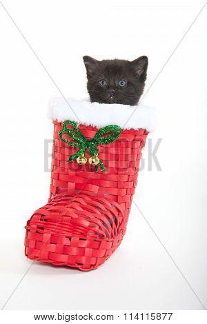Cute Black Kitten In Shoe