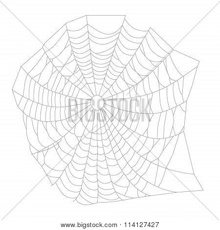 Spider Web Or Net