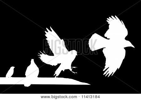 Birds (raven, Doves, Sparrow)