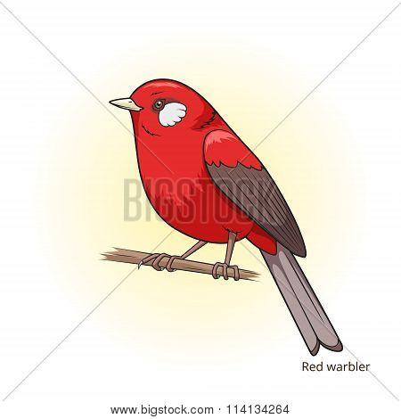 Red warbler bird educational game vector