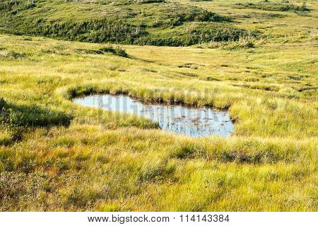 Large Puddle In Swampy Meadow