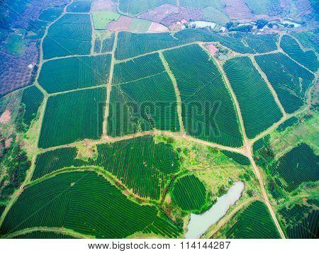 Aerial view of tea hills in Moc Chau highland