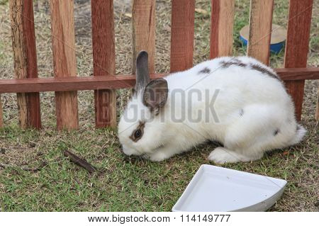 Cute Rabbit On The Hay