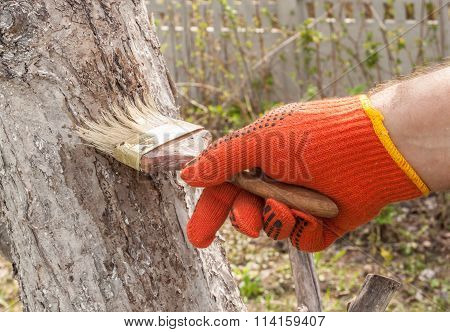 Male Hand With A Paint Brush Whitening Apple Tree