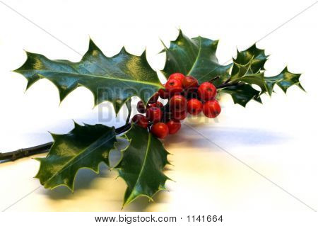 Holly Sprig