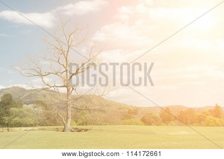 Nara park with grassland under blue sky with nobody, Japan, Asia.