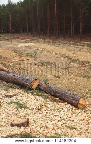 Environment, Nature And Deforestation Forest Concept - Felling Of Trees In Woods