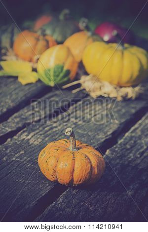 Gourds in different colors on the table