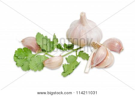Garlic And Twig Of Coriander On A Light Background