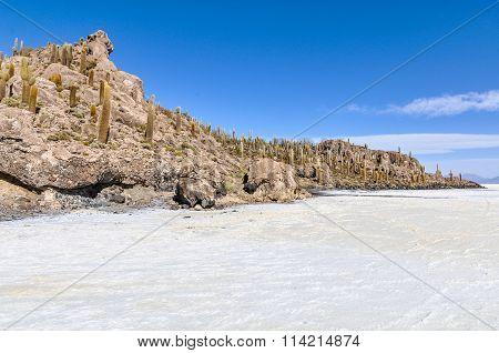 Cacti In Salar De Uyuni, Bolivia