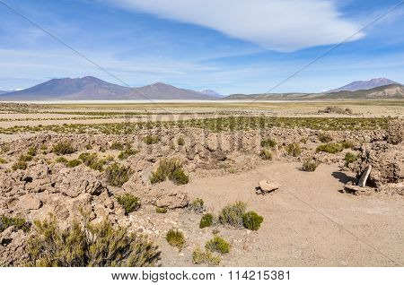 In The High Andean Plateau, Bolivia