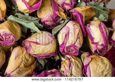 Withered Roses As Backdrop