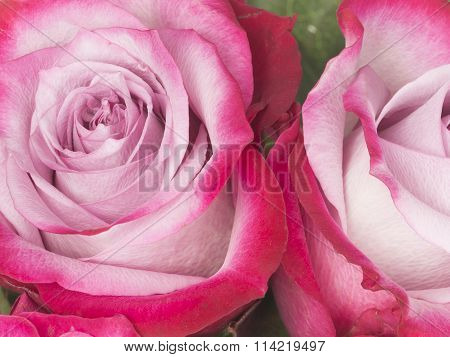 Beautiful Flowers Of Crimson Roses