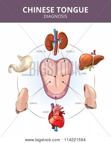 Chinese Tongue Diagnosis. Internal organs projections. Medical vector infographics