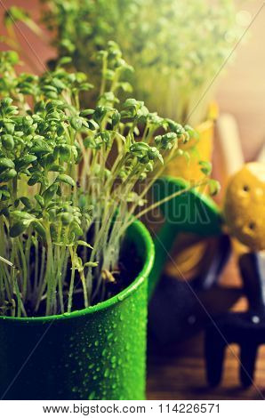 Fresh Watercress Sprouts