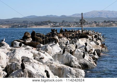 Sea Lion Rocks