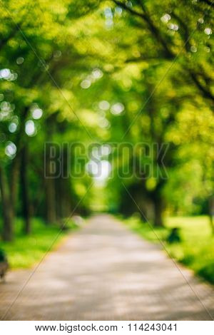 Blurred abstract bokeh natural bakground of Walkway Path With Gr