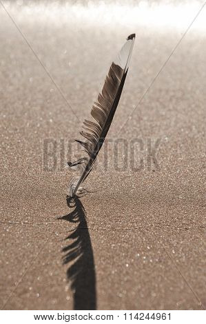 Feather  In The Foreground Seascape