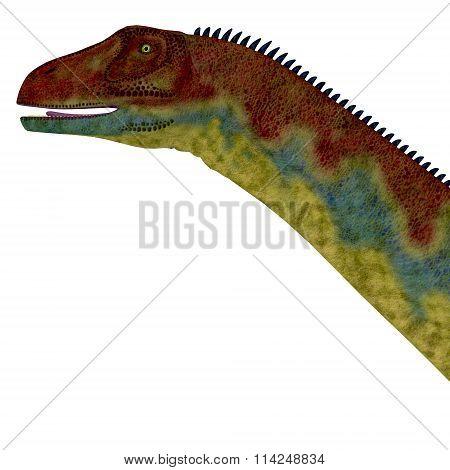 Jobaria Dinosaur Head