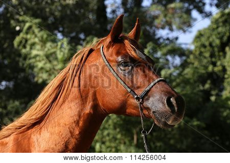 Side View Portrait Of Beautiful Horse In Summer Corral