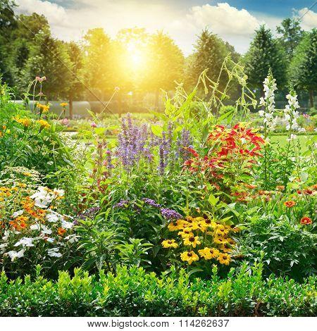 Multicolored flowerbed in park. Sunrise.
