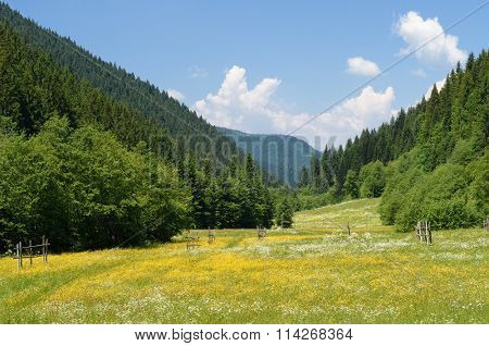 Summer landscape. Green meadow with flowers. Mountain Valley. Sunny day, good weather. Carpathians, Ukraine, Europe. Beautiful world