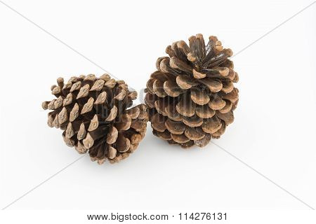 Brown Pine Cones Isolated White Background