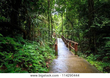 Rain Forest And Bridge