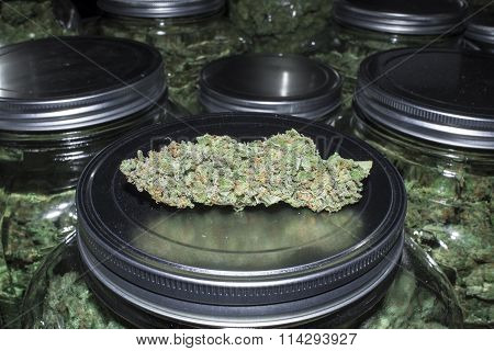 Close Up Marijuana Bud with Jars Full in Background