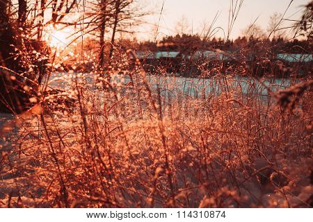 Dry stalks and branches of plants in the winter against the sun.